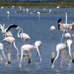 flamingo_kerk4